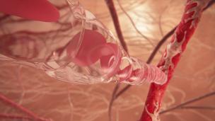 出来たばかりの血管に赤血球が流れ込む瞬間