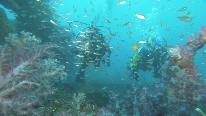 漁礁にはソフトコーラルが 東京湾とは思えない美しい風景