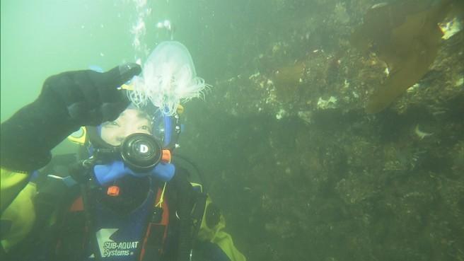 春の海には 日本の固有種カミクラゲがたくさん