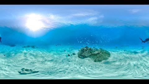 慶良間諸島国立公園 ビジターセンター 展示映像(12K相当の360度水中VR映像)